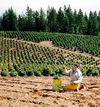 Tour The Ranch Camden Ranch - Christmas Tree Seedlings